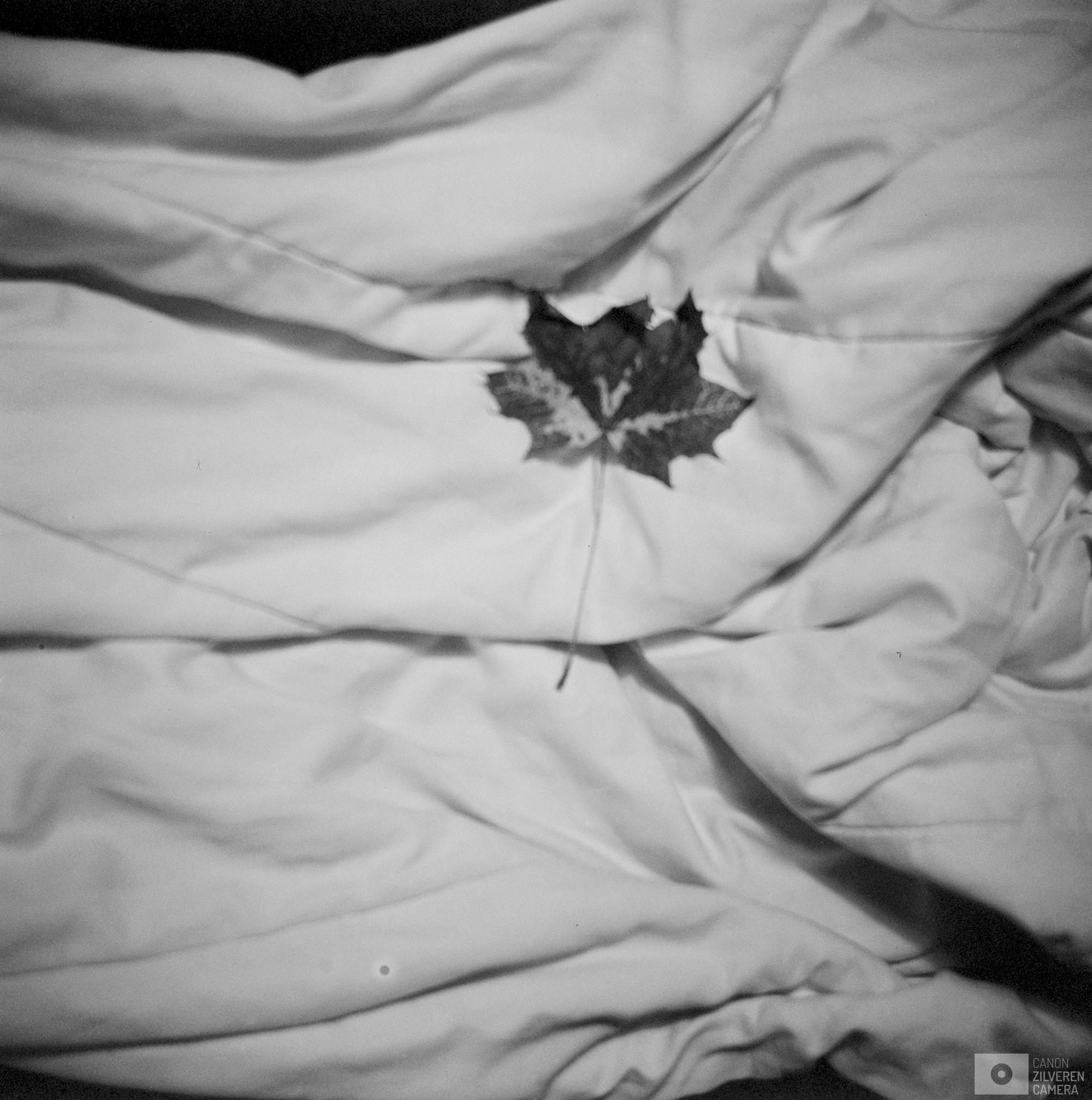 02-2017-documentair-nationaal-vleugellam-582825