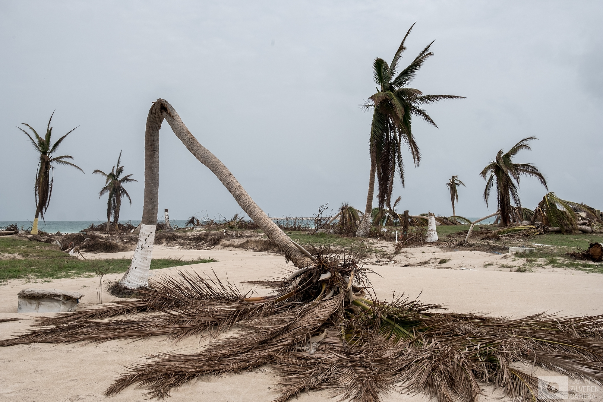 SINT MAARTEN | A broken down palm tree is seen on one of the many heavily damaged beaches of Sint Maarten. | #4