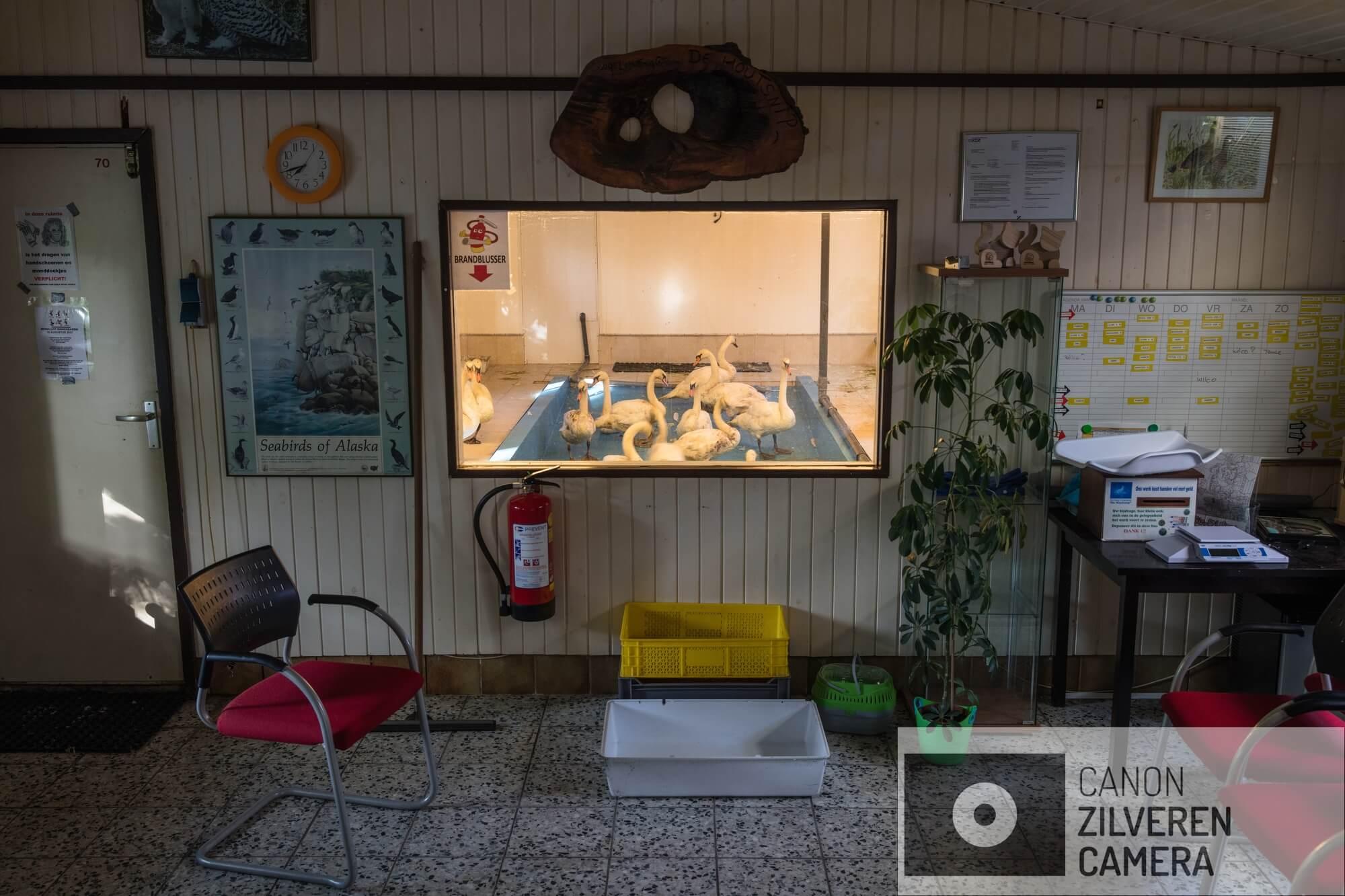 Iedere beschikbare ruimte in het opvangcentrum wordt benut voor de opvang van de zwanen. Op 23 juni 2018 is er een enorme olievlek ontstaan in de Rotterdamse haven nadat een tanker tegen een steiger was gebotst. Meer dan 200 ton olie kwam in het water terecht, met ernstige gevolgen voor de watervogels in het gebied waaronder de zwanen. Deze fotoserie is gemaakt bij een vogelopvangcentrum in Hoek van Holland (de Houtsnip), waar met man en macht is gewerkt om de besmeurde zwanen te reinigen en goed op te vangen. De naam van de serie ziet op de aanpak van Vogelopvang de Houtsnip, die bewust afweek van het protocol voor wassen van met olie verontreinigde vogels. Dit protocol schrijft voor dat je na het vangen twee of drie dagen moet wachten met de reiniging om de vogels eerst weer op krachten te laten komen en te laten 'ontstressen'. De Houtsnip gelooft echter dat dit bij zwanen onverantwoord is, omdat deze vogels zich continu blijven poetsen en daardoor de verontreinigde olie ook binnen krijgen. Bovendien vindt de Houtsnip dat door direct met wassen te beginnen de vogels maar 1x stress hebben en niet na twee dagen rust opnieuw in een voor hen bedreigende situatie worden gebracht. Daarnaast leken de vele vrijwilligers het zelf ook prettig te vinden om snel aan de slag te kunnen om de vogels te helpen, in plaats van lijdzaam af te wachten totdat de wachttijd voorbij is: er wordt met veel passie en inzet gewerkt. Het op de juiste wijze reinigen lijkt overigens ook een hele kunst. Het moet volgens het protocol met Dreft, dat er in grote hoeveelheden doorheen gaat. Het heel goed uitspoelen is wezenlijk, omdat anders het verenkleed wordt aangetast en de zwaan zelfs zijn drijfvermogen kan verliezen.
