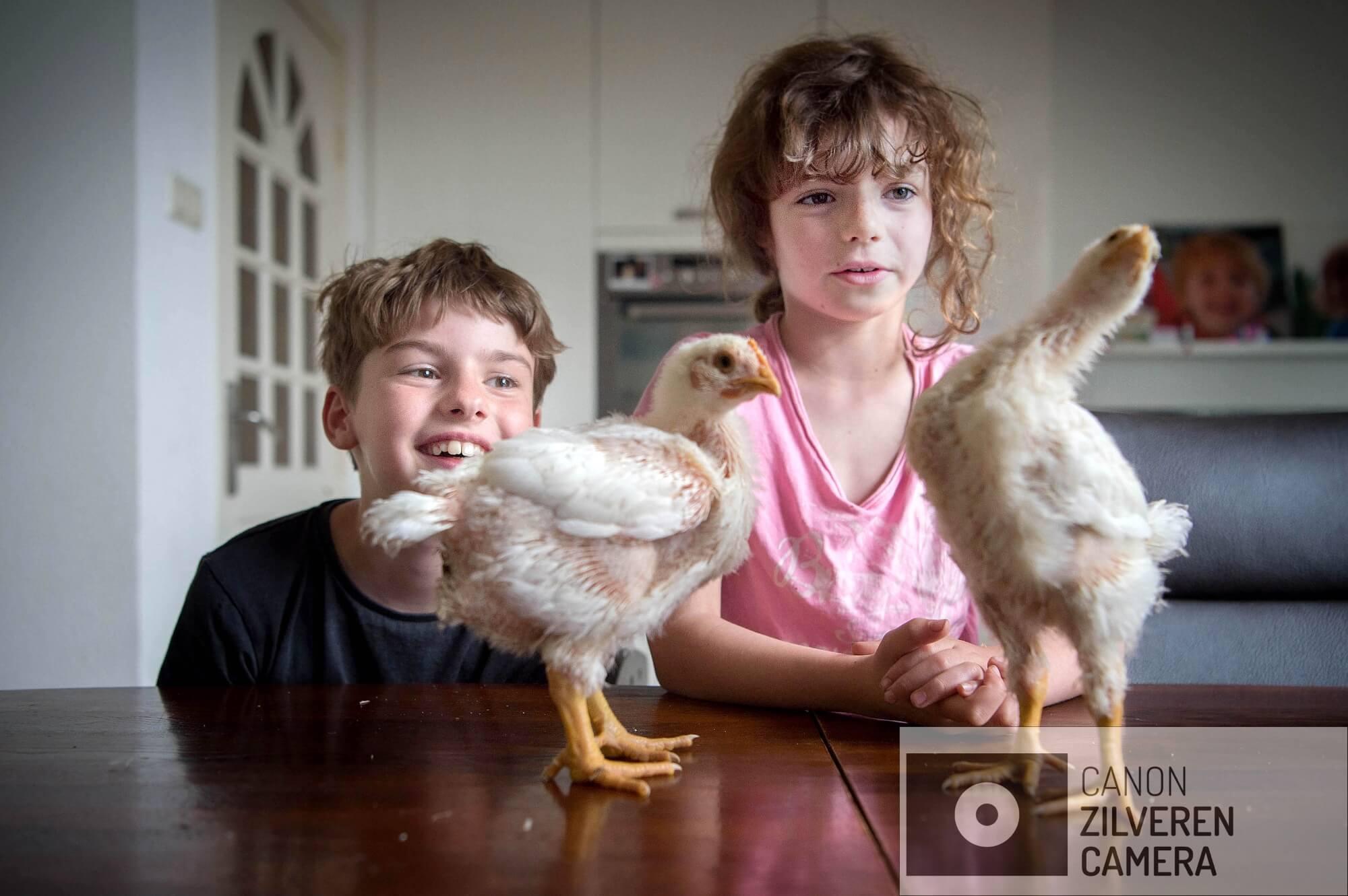 18-04-2018. VUGHT. Familie Beks doet mee aan het project Doehetzelfkip. De familie Beks, waartoe naast vader Jeroen, moeder Marjolein,dochter Loïs (7)en zoon Tijmen (10) behoren, is een van de zes deelnemers aan het Doe-het-zelf-kipproject. Van ei tot aan de slacht.