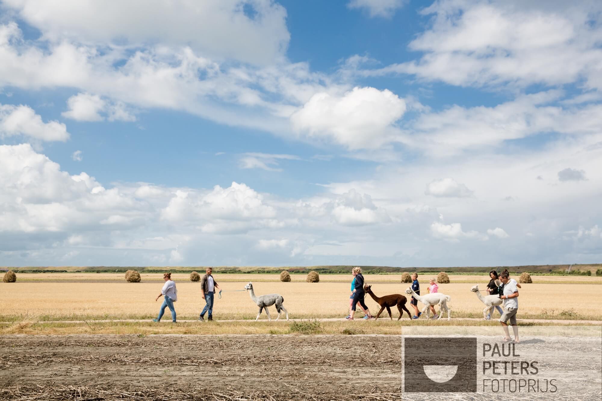 06. Voor de eigen rubriek VRIJ voor NRC Handelsblad. Hoe breekt de Nederlander uit de sleur van alledag?  Bijvoorbeeld door te wandelen en High Tea te drinken met Alpaca's in Aagtekerken, Zeeland.