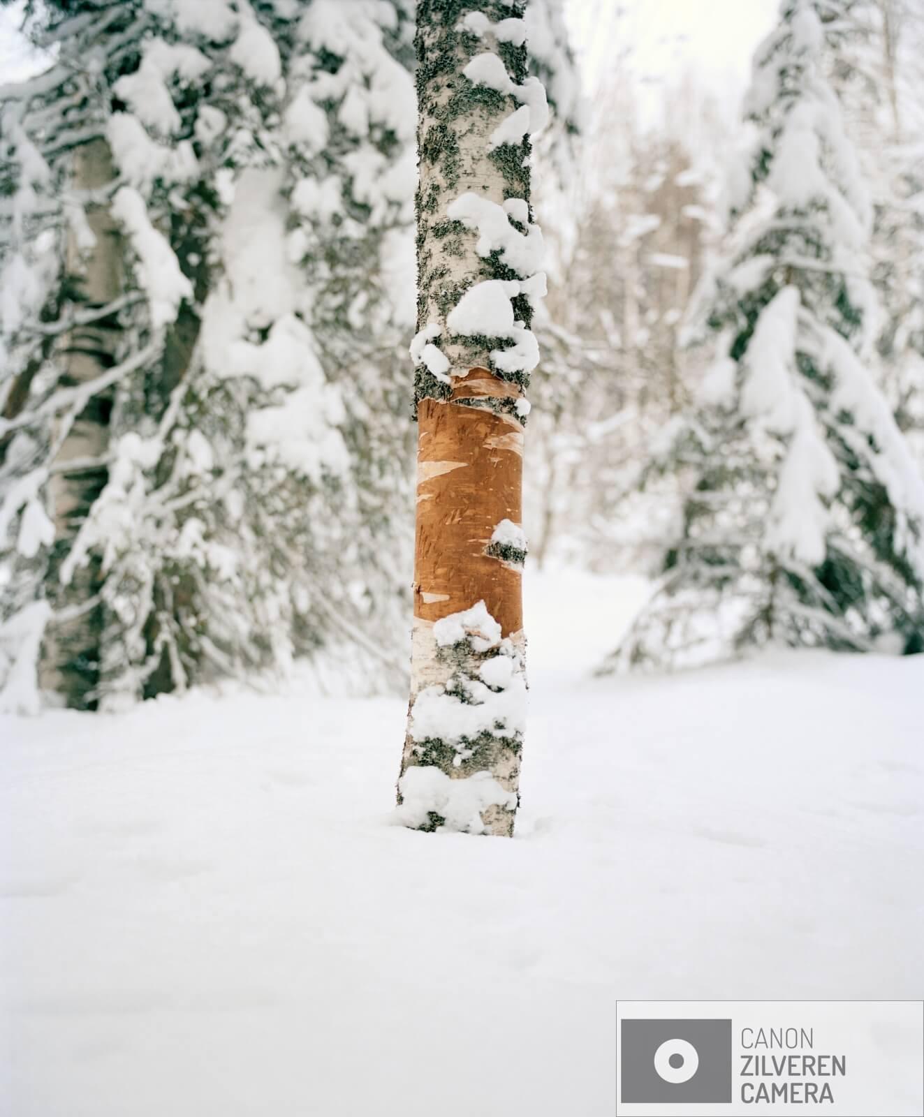 02/12  Borealis / Berdyshikha, Rusland, maart 2018  Het boreale woud is de grootste vegetatiezone op aarde en beslaat zo'n 29 procent van het totale bosgebied. Met een oppervlakte van negen miljoen vierkante kilometer is het flink groter dan het Amazone -regenwoud. Met name in Rusland is sinds de val van het communisme de ontbossing enorm toegenomen. Boreale bossen zetten op grote schaal koolstofdioxide om in zuurstof. Een gemiddelde boom produceert in honderd jaar genoeg zuurstof om een persoon twintig jaar van te laten ademen. Het tropisch regenwoud en het boreale woud vormen samen de longen van onze aarde. Toch is minder dan twaalf procent van deze bossen beschermd gebied. De bomenwereld is door de klimaatverwarming in verandering. Vooral in het hoge noorden zijn die veranderingen merkbaar. Zo kwam de temperatuur vorig jaar in delen van arctisch Rusland 6 á 7 graden boven het gemiddelde.  Gennady Tugushin woont in het dorp Berdyshykha diep verscholen in het eindeloze Russische boreale woud. Het dorp is leeggelopen, zoals vele dorpen in Rusland, alleen Gennady woont er nog samen met zijn vrouw. Gennady heeft zijn hele leven voor het lokale houtbedrijf gewerkt. Ze leveren hout aan een van de grootste papierfabrieken van Europa. Gennady is gepensioneerd maar werkt nog steeds voor het bedrijf om zijn magere pensioen wat aan te vullen.