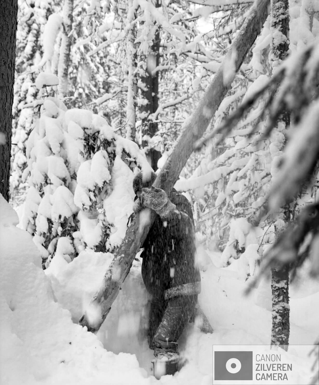 06/12  Borealis / Berdyshikha, Rusland, maart 2018  Het boreale woud is de grootste vegetatiezone op aarde en beslaat zo'n 29 procent van het totale bosgebied. Met een oppervlakte van negen miljoen vierkante kilometer is het flink groter dan het Amazone -regenwoud. Met name in Rusland is sinds de val van het communisme de ontbossing enorm toegenomen. Boreale bossen zetten op grote schaal koolstofdioxide om in zuurstof. Een gemiddelde boom produceert in honderd jaar genoeg zuurstof om een persoon twintig jaar van te laten ademen. Het tropisch regenwoud en het boreale woud vormen samen de longen van onze aarde. Toch is minder dan twaalf procent van deze bossen beschermd gebied. De bomenwereld is door de klimaatverwarming in verandering. Vooral in het hoge noorden zijn die veranderingen merkbaar. Zo kwam de temperatuur vorig jaar in delen van arctisch Rusland 6 á 7 graden boven het gemiddelde.  Gennady Tugushin woont in het dorp Berdyshykha diep verscholen in het eindeloze Russische boreale woud. Het dorp is leeggelopen, zoals vele dorpen in Rusland, alleen Gennady woont er nog samen met zijn vrouw. Gennady heeft zijn hele leven voor het lokale houtbedrijf gewerkt. Ze leveren hout aan een van de grootste papierfabrieken van Europa. Gennady is gepensioneerd maar werkt nog steeds voor het bedrijf om zijn magere pensioen wat aan te vullen.