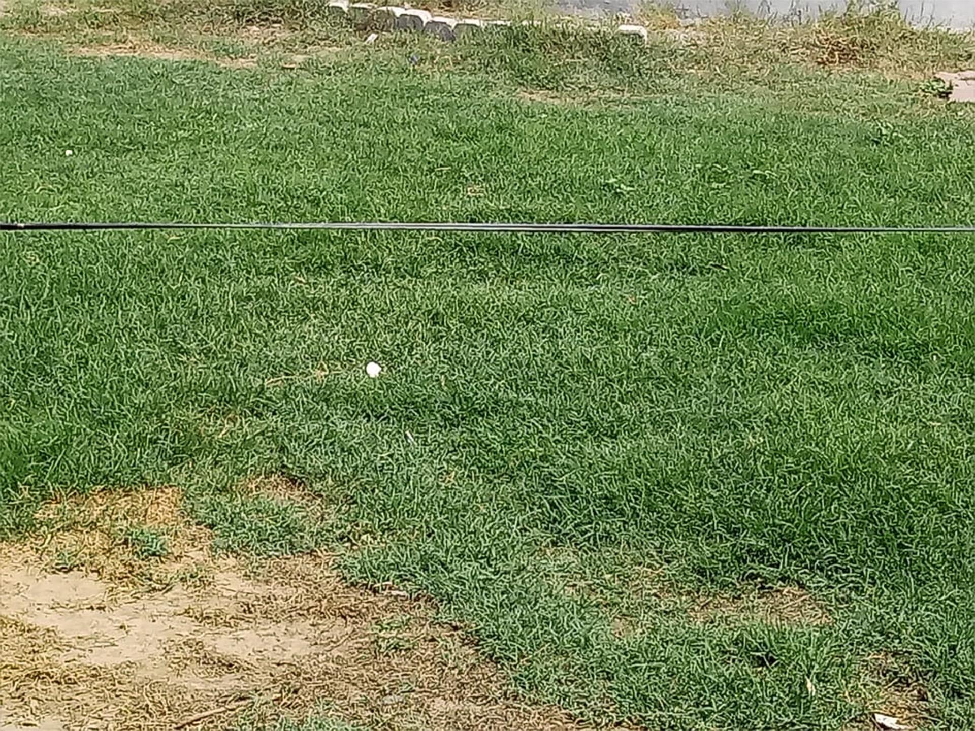 Abba-Grass-12x16cm