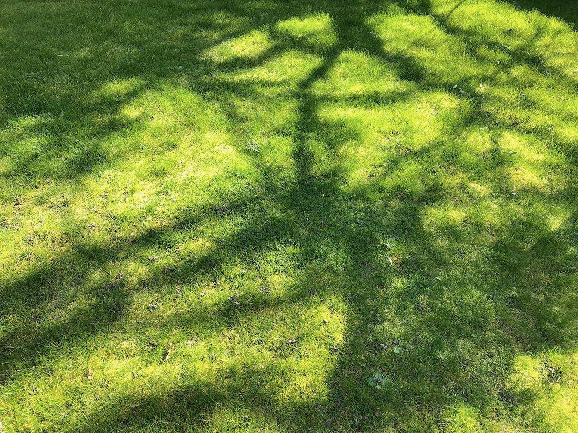 Adday-Grass-12x16cm