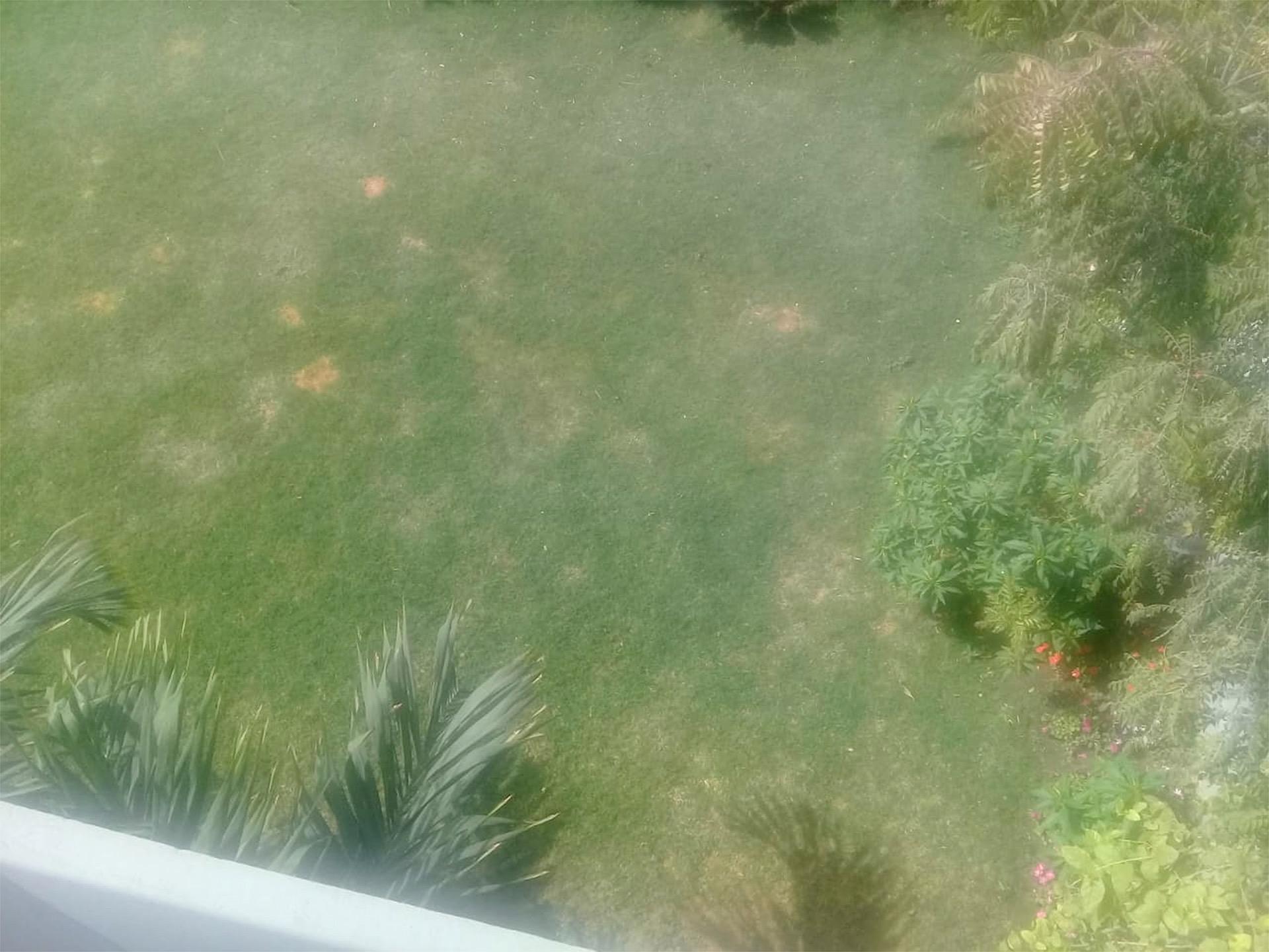 Faaiz-Grass-12x16cm