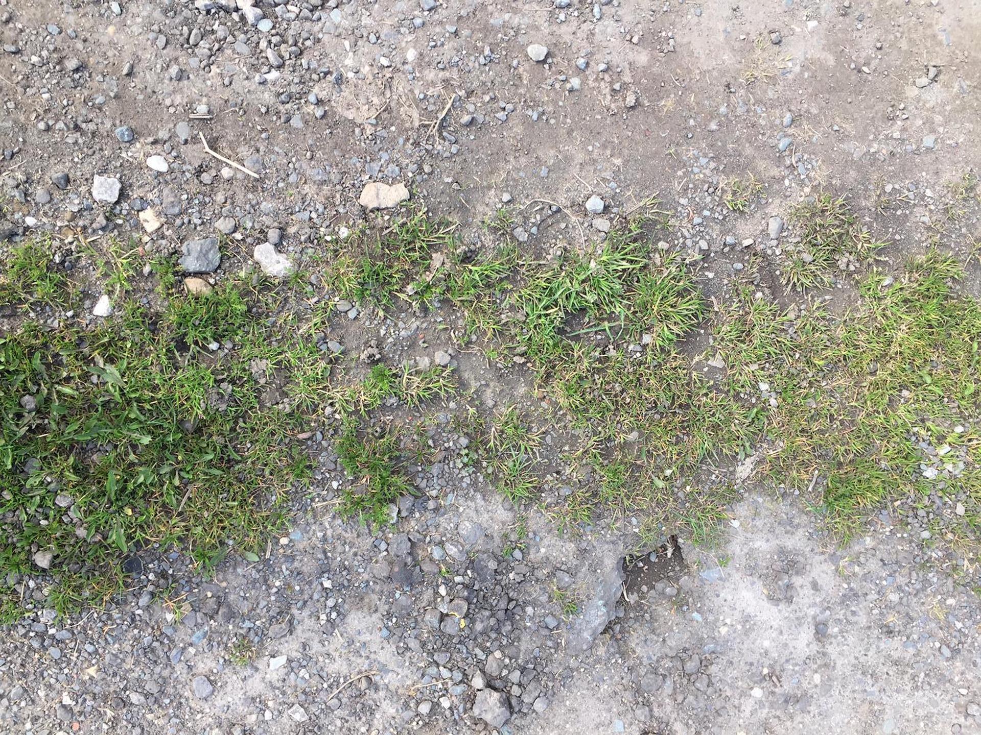 Kahal-Grass-12x16cm