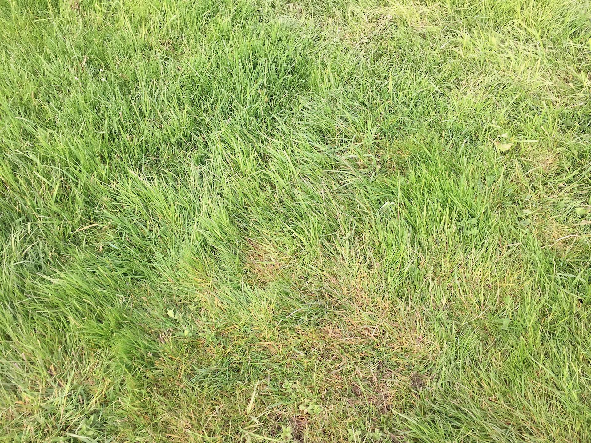 Mum-Grass-12x16cm