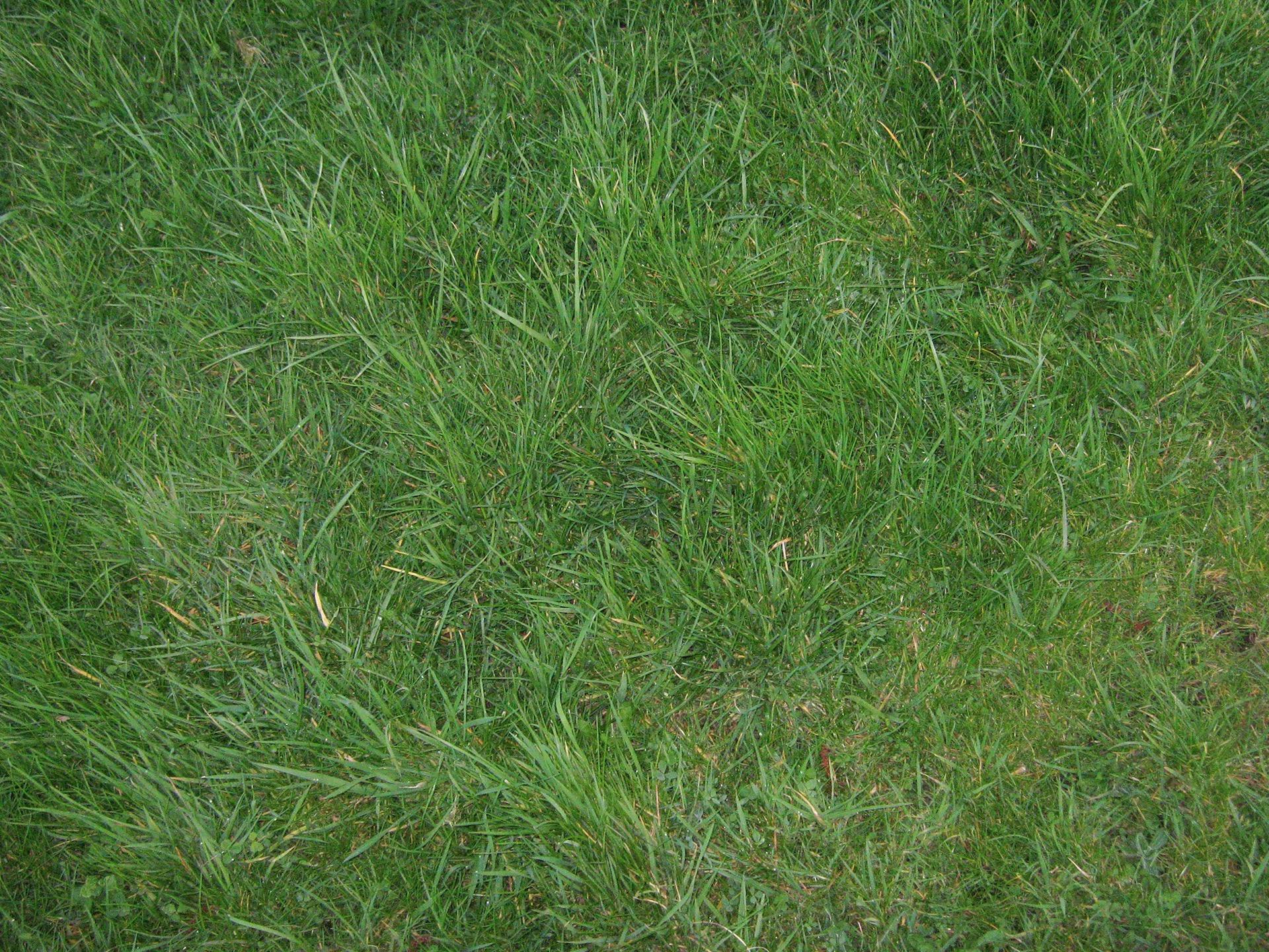 Nael-Grass-12x16cm